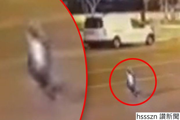 video-ghost-alien-turkey-cctv-497149_620_413