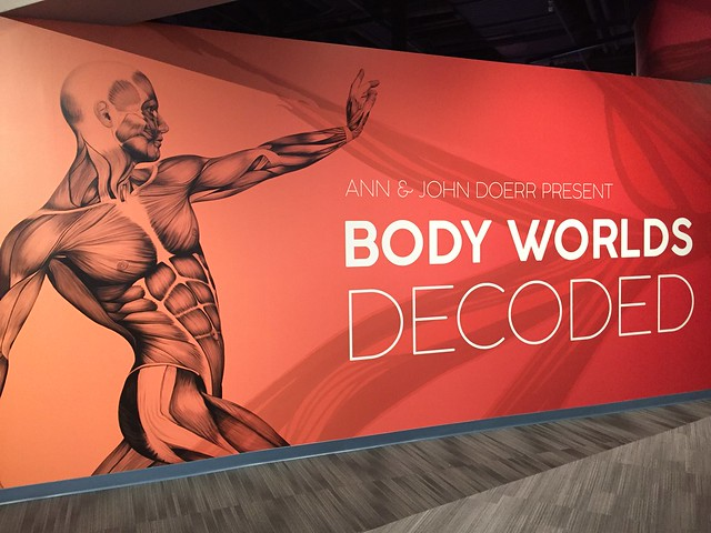 Body Worlds Decoded