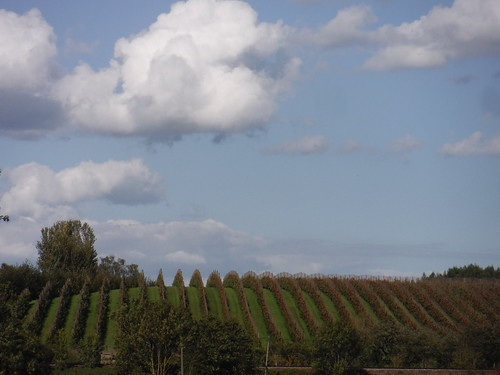 Orchard near Railway Line, near Osiers Farm