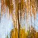 Foliage, Fall(ing) #2