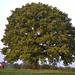 Uncramped oak