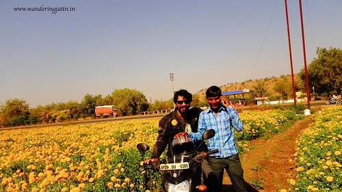 Fun times in the field of Marigold flowers