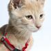 A204887 -- Pico  -- fawn kittens_-2