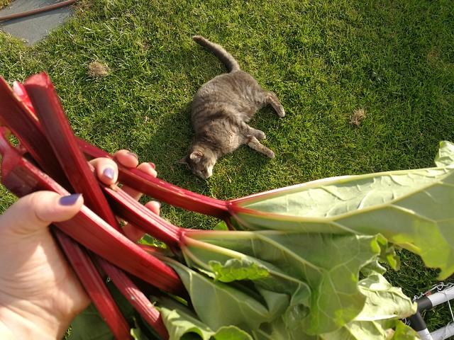 6 sprigs of rhubarb