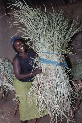 Priscila Ouma from Busia County smilling about her harvested, dried and stored Bracharia.