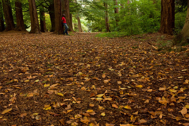 Week 138 of chemo complete: Autumn morning in Stanley Park