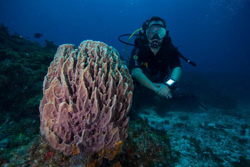 diving (59 de 77)