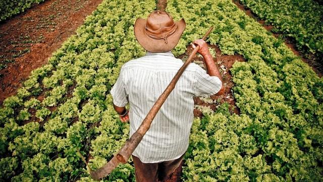 Feiras e mercados populares se destacam como os principais espaços para comercialização da agricultura familiar - Créditos: Agência Brasil