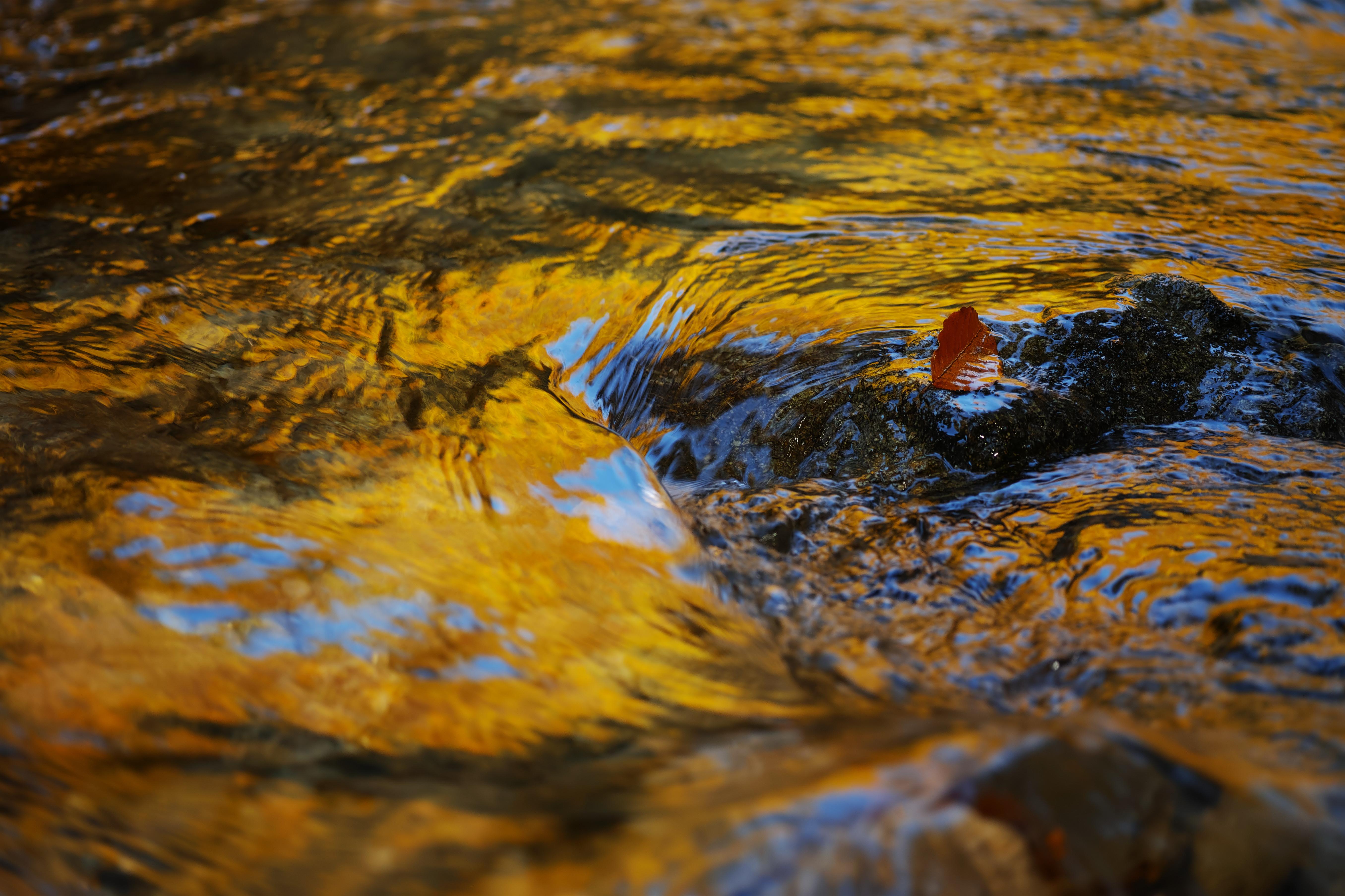 秋流(Autumn flow