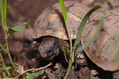 Tortoise babies