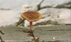 Ein kleiner Pilz, der sich aus dem Pflaster heraus gekämpft hat! - A small fungus breaks through the paving stones!