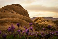 Sand stone and Hyacinth