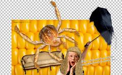 bread spider