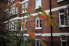 London Walk-6208.jpg