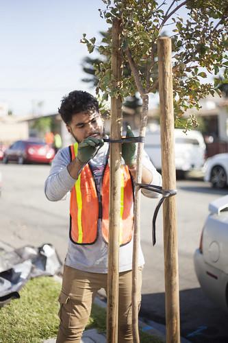 Huntington Park Street Planting
