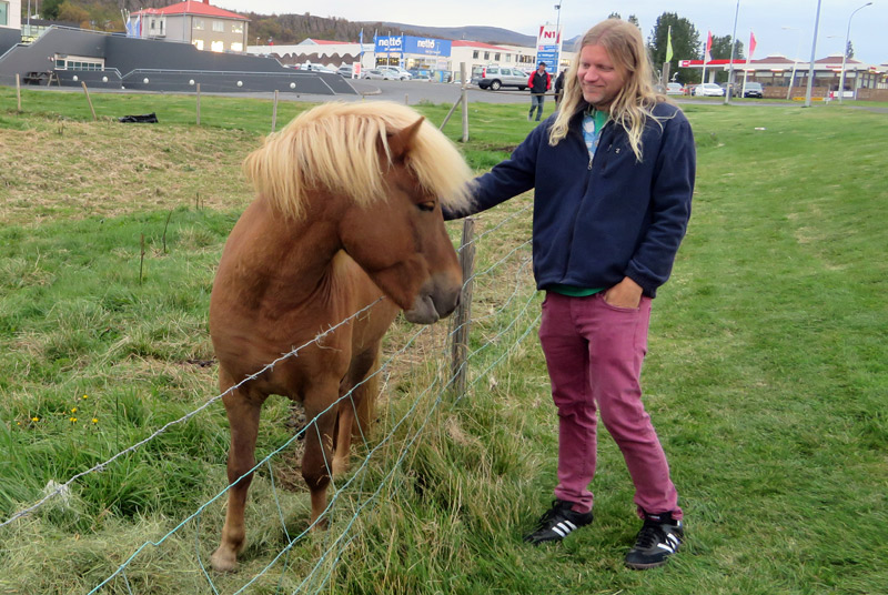 iceland-blond-horse