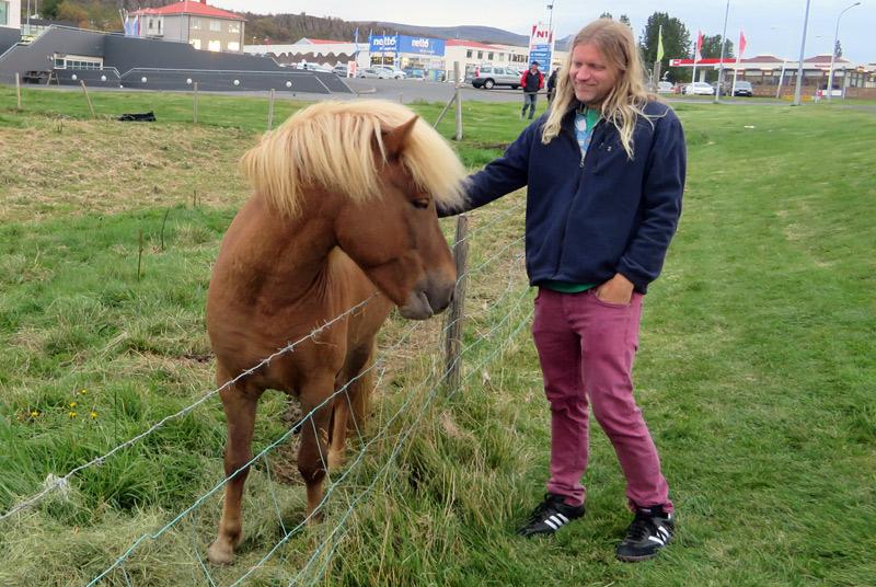 iceland-blond-horse