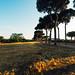 Rome - Villa Pamphili Sunrise