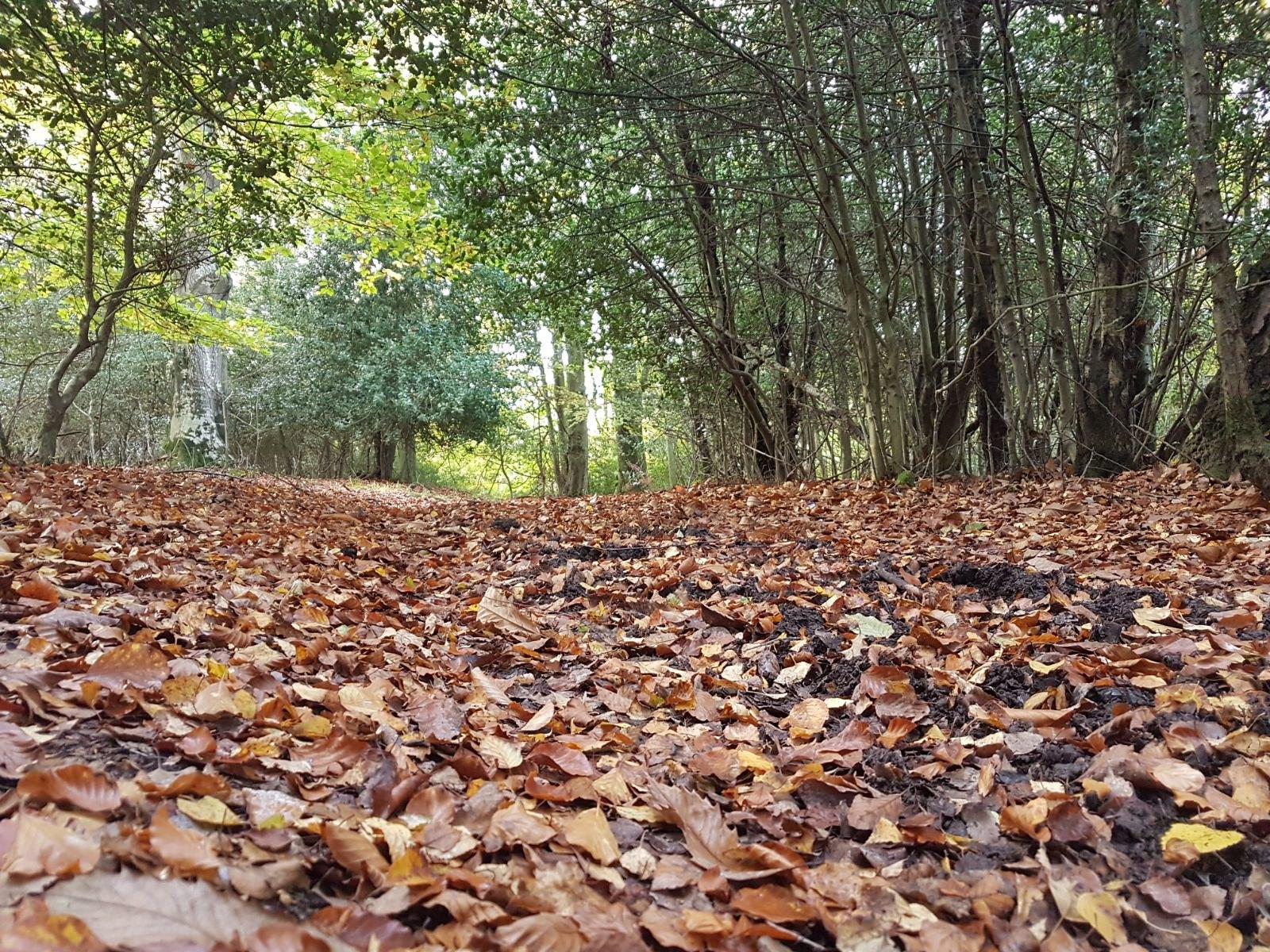 12a Ashurst Circular Walk