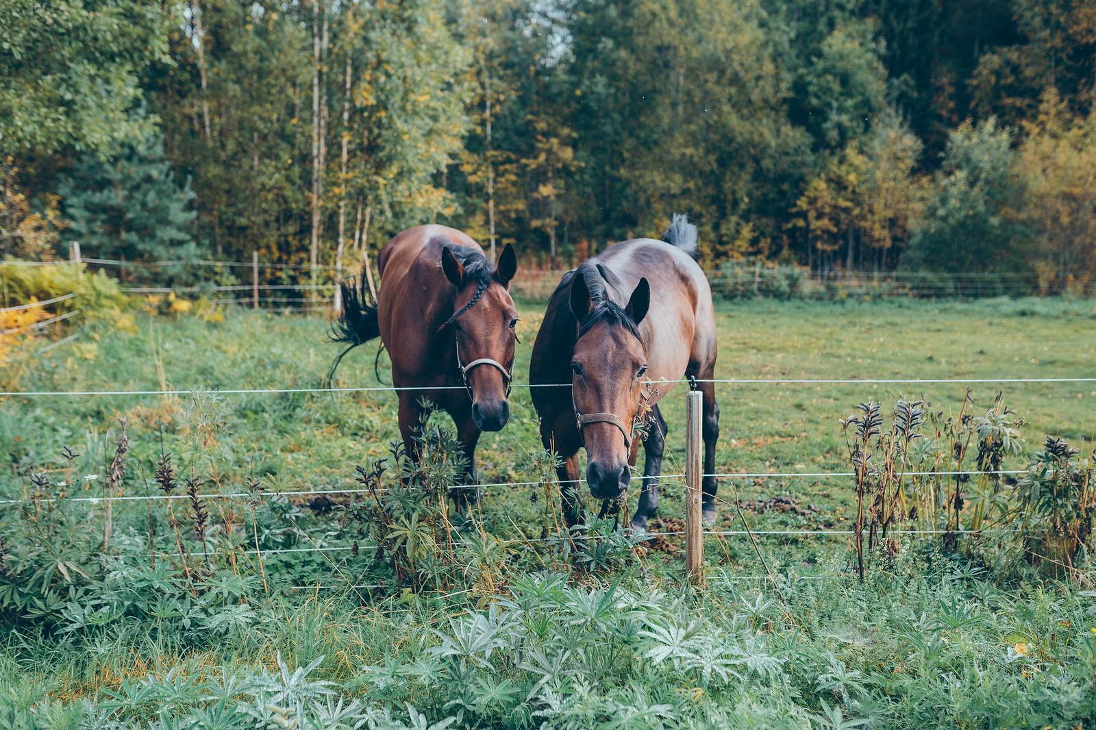 hästar - karinevelina.se
