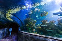 Malta Sea Aquarium