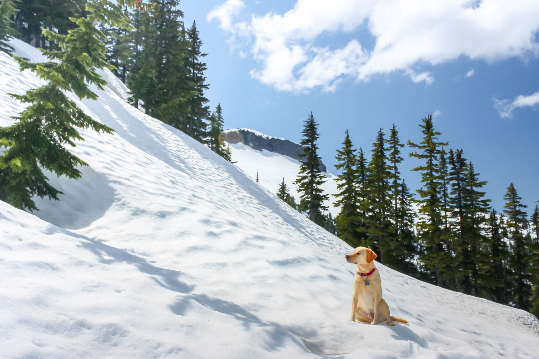 Summit dogs above Upper Wildcat Lake