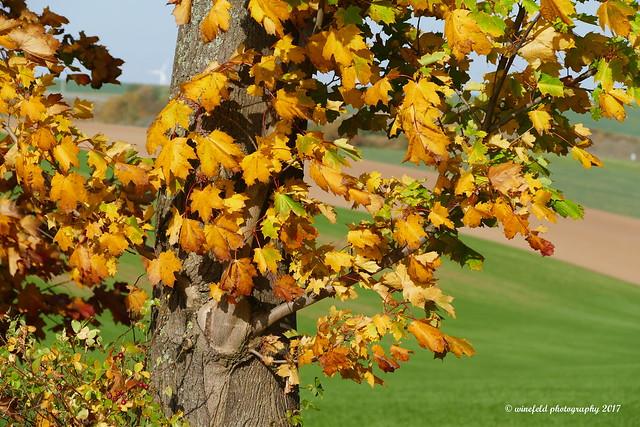 Impressionen in der schönen Jahreszeit Herbst / Impressionen in the nice season autumn