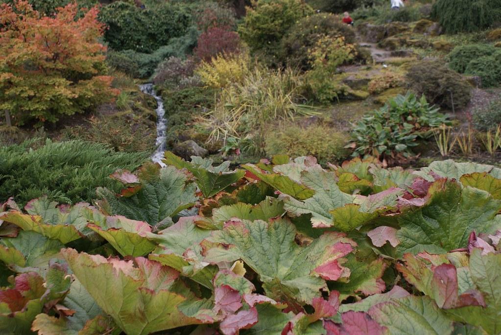 > Rivière et plantes de la forêt tempérée au jardin botanique d'Edimbourg