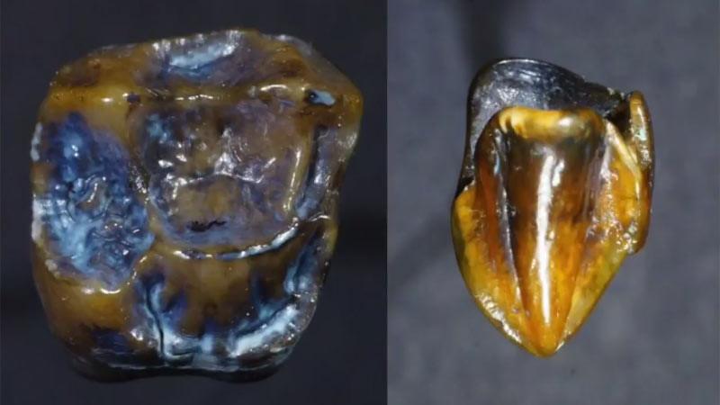 Gigi purba berusia 9,7 juta tahun ditemukan di Eppelsheim dekat Mainz, Jerman
