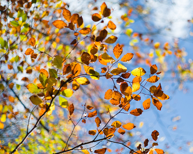 A warm welcome to autumn (Summilux bokeh)