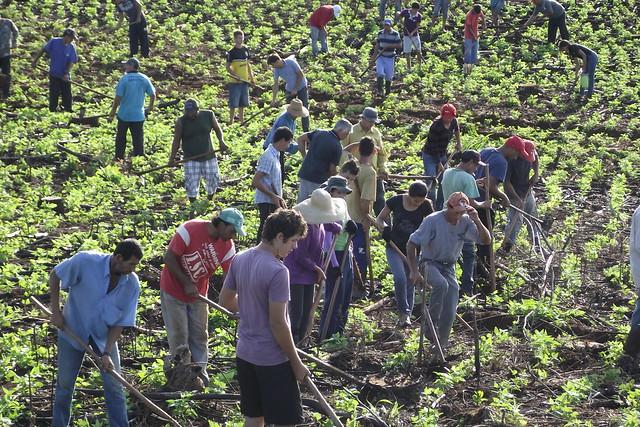 Agricultura familiar produz 70% dos alimentos consumidos no Brasil - Créditos: Wellington Lenon