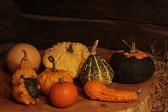 Pumpkins in Botaniska