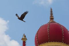 India-Mysore-GK-72043_20150106_GK.jpg