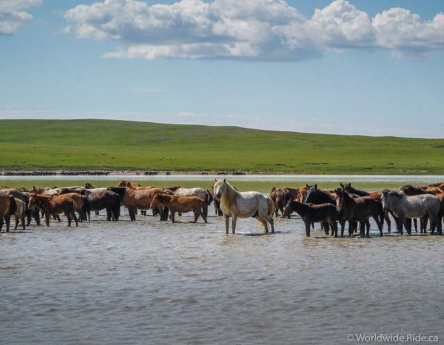 Eastern Mongolia Loop