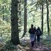 15/10/2017 - Ousbrough Woods