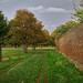 Bushy Park wall