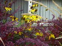 Late Season Garden Colours