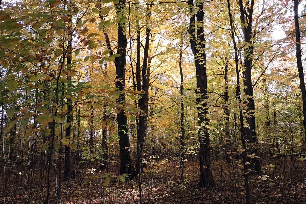 Parc national du mont Saint-Bruno