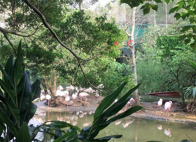動物園 (15)