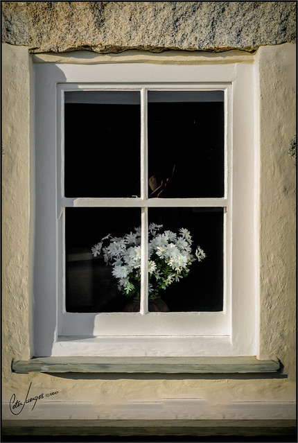 window whites