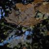 Leaf me on water