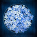 Blue Hydrangea Circle by photoart33