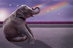 Magical elephant