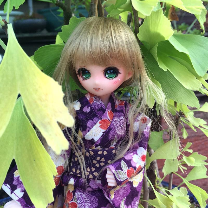[Obitsu 24-Petite Hime] Ma Petite Hina <3 37862186691_412a77af29_c