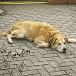 2015-06-29_20-15-03 - Alter Hund macht Pause
