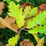 Autumn in Ashton Park, Preston - 4