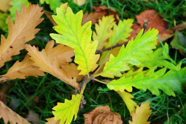 Autumn in Ashton Park, Canon EOS 750D, Canon EF-S 18-55mm f/3.5-5.6 IS STM