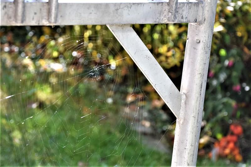 Spider Webs 14.10 (3)