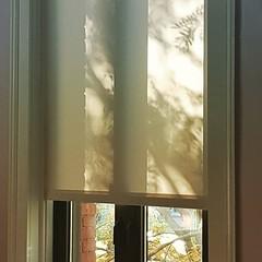 Leaf shadows on office blinds