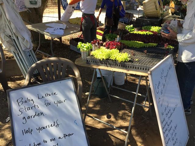Plants giveaway